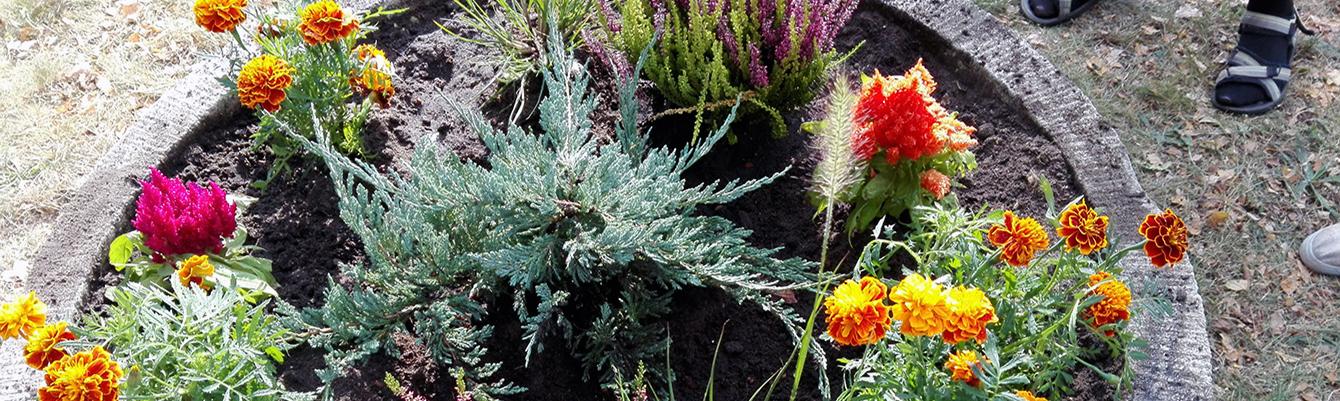 Wspólne sadzenie kwiatów i krzewów