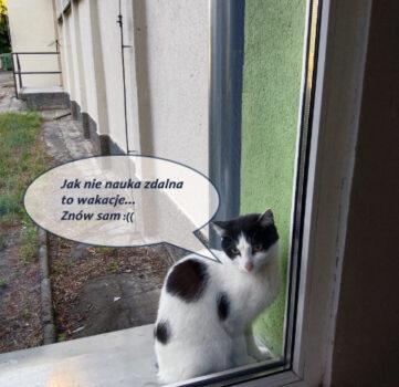 Wakacyjna tęsknota szkolnego kota